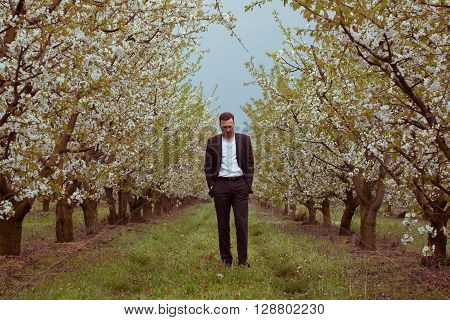 middle aged caucasian man walking through rows of blooming trees