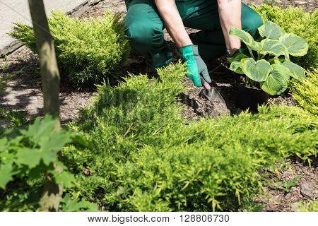 Gardener Planting The Flowers