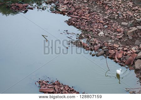 White bird on dirty pool with waste and garbage on the side