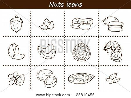 Set of cartoon hand drawn objects on nuts theme: hazelnut pumpkin and sunflower seeds peanut pecan pistachio cashew walnut acorn almond coconut cocoa. Raw healthy food concept