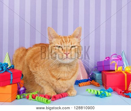 Orange Ginger Tabby Cat Sitting With Birthday Presents