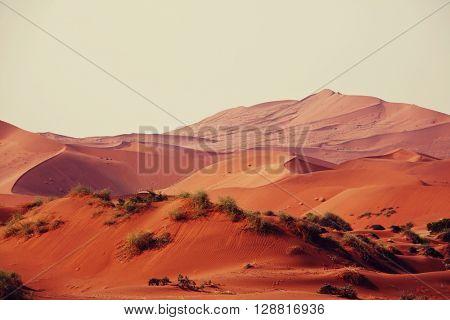 Sand dunes in Namib desert
