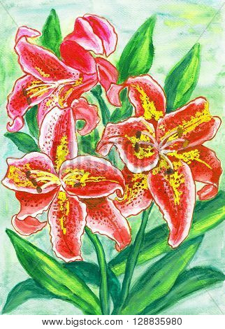 Red lilies hand painted picture in watercolor