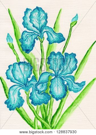 three blue irises hand painted picture watercolours.