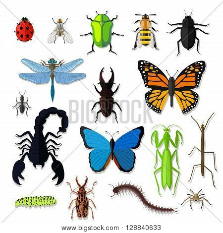 Set of various insects design flat. Bug and butterfly, ant and bee, spider and fly, ladybug and dragonfly, grasshopper wildlife, creature cockroach isolated on white background. Vector illustration