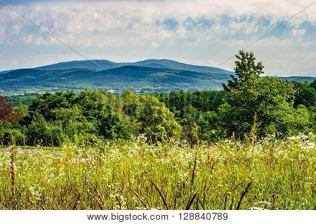 Alpine Meadow With Tall Grass