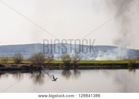 Photographic scene showing some burnt vegetation on Mures river bank.