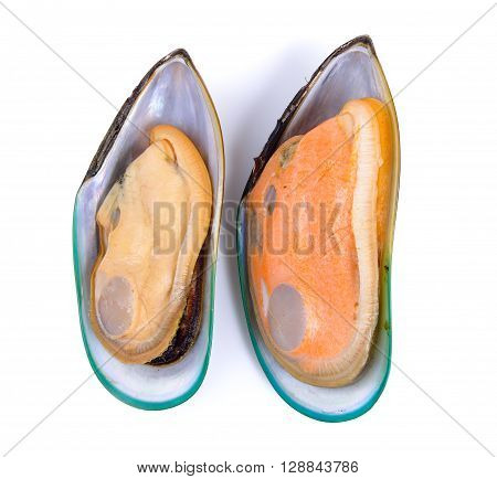 A mussels are on the white background
