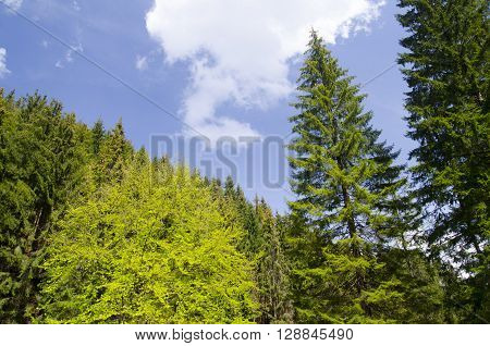 Summer forest landscape pure air and oxygen