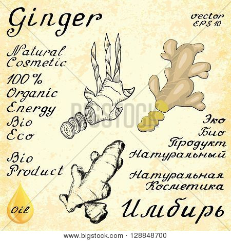 Ginger. Vector set of 3 drawing and hand-lettering. In English and Russian texts. Eco Friendly. For labels flyers online stores. Natural cosmetic. Bio products. Food spices