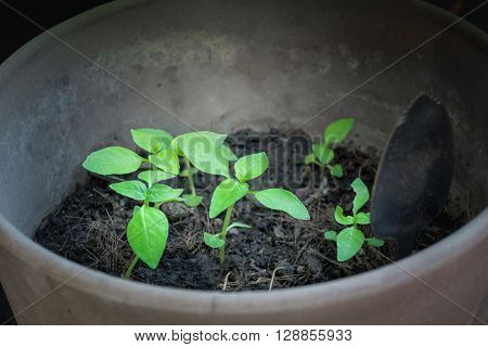 Growing of seedlings from the soil for planting Green plants growing up is like beginning of life