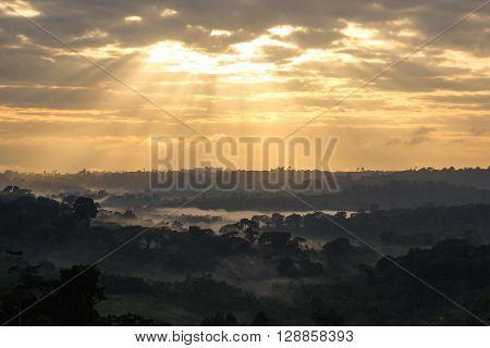 Sunrise View Of Amazon Rainforest