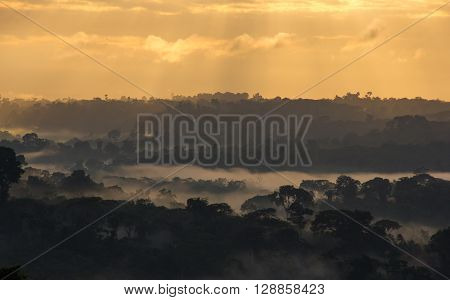 Sunrise View Of Amazon Rainforest