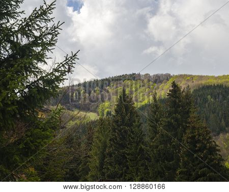 Green mountain forests environment protection conceptual photo
