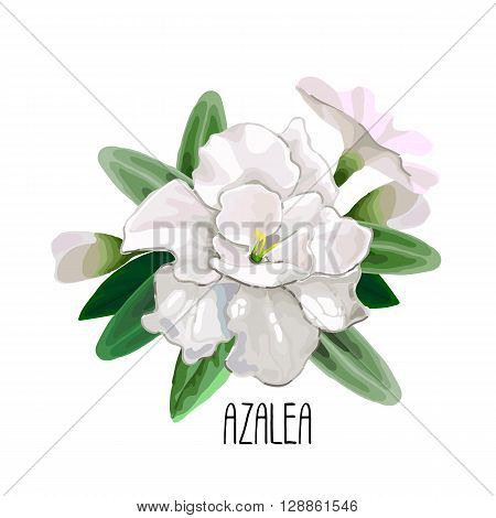 Azalea vignette. Vector floral design isolated on white background