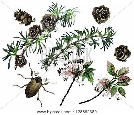 Watercolor forest set. Insects among larch cones and foliage isolated on white background