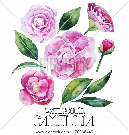 Watercolor camellia set isolated on white background. Vector floral design