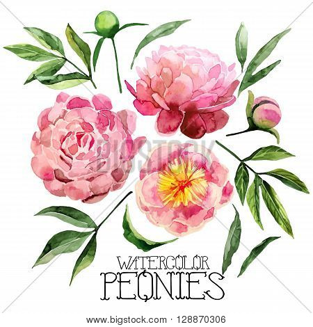 Watercolor peonies set isolated on white background. Vector floral design