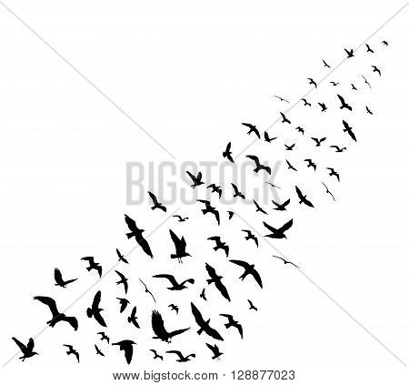Bird Wedge Silhouettes On White Background. Vector Illustration