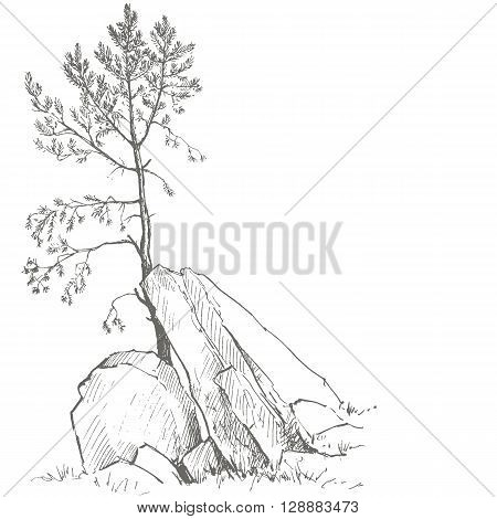 young pine tree and rocks drawing by ink, sketch of wild nature, forest sketch, hand drawn vector illustration