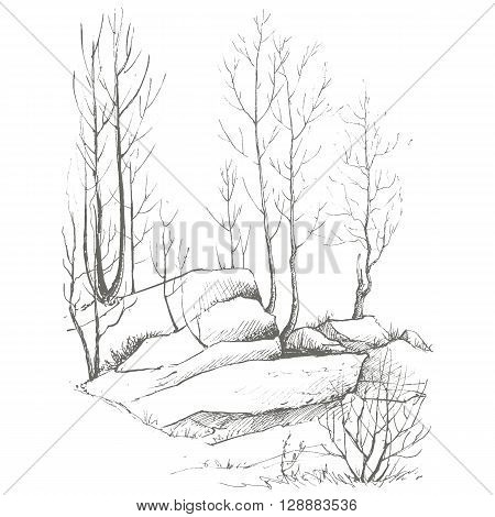 young birch trees, bushes and rocks drawing by ink, sketch of wild nature, forest sketch, hand drawn vector illustration