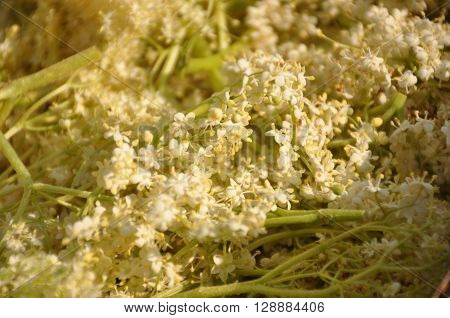 drink, blossom, homemade, white blossoms, elderflower, elder, sambucus nigra