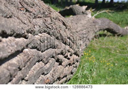 nature, tree, grass, river, bark, felling, cutoff