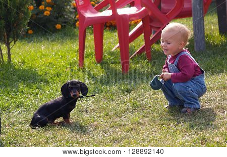 Little girl playing with dachshund puppy on the garden