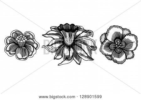 Set of sketchy Monochrome abstract doodle flowers. Vector illustration. Hand drawn sketch. Isolated on white.