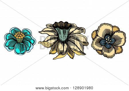 Set of sketchy Colored abstract doodle flowers. Vector illustration. Hand drawn sketch. Isolated on white.