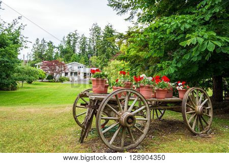 Old wooden wagon with flowers and plants in terracotta pots.