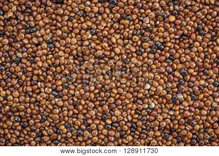 texture of kaniwa grain, gluten free, indigenous Andean food crop, life size macro