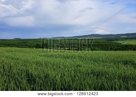 Nature landscape of green farm fields and cloudy sky