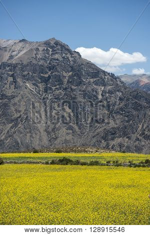 Canyon of the Colca River in southern Peru. Peru's third most-visited tourist destination with about 160000 visitors annually it's located about 100 miles (160 kilometers) northwest of Arequipa