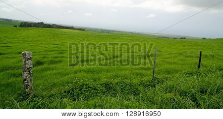 Wired Fence Along Kohala Mountain Road