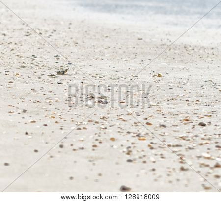 Sea beach shells on sand in sun daylight relaxation landscape wooden bridge view in Jacksonville beach, Florida