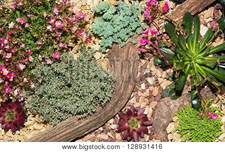 Desert Landscape Made With Succulents And Stones.