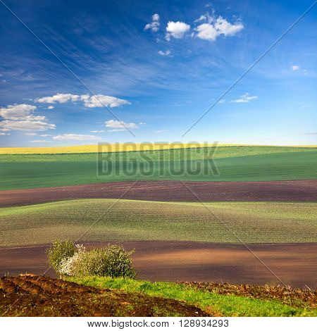 Original Landscape of Colorful fields in beautiful striped hills in minimalism style