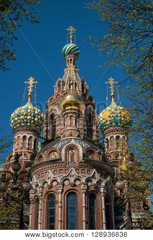 Church of the Savior on Spilled Blood, St. Petersburg, Russia. Domes and branches Mikhailovsky park trees.