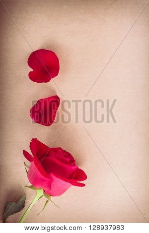 Red Rose Flower On Blank Paper Page For Creative Your Message Text Here