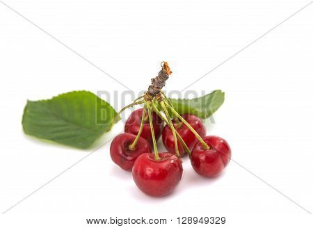 sweet cherries on a white backgroundt, gardening, close-up,