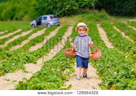 Adorable little kid boy picking and eating strawberries on organic bio berry farm in summer, child on warm sunny day. Harvest fields in Germany. Healthy food for children.