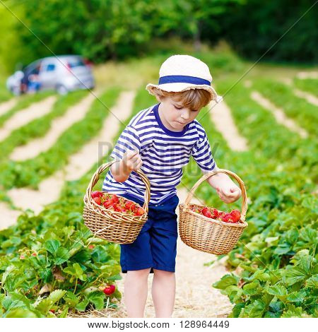 Active little kid boy picking and eating strawberries on organic bio berry farm in summer, child on warm sunny day. Harvest fields in Germany. Healthy food for children.
