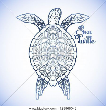 Graphic Hawksbill sea turtle drawn in line art style. Ocean vector creature in blue colors isolated on white background. Top view. Coloring book page design