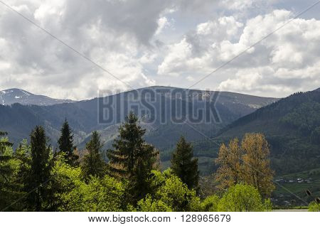 Summer forest and mountains. Environment protection and ecology issues. Save our forests!