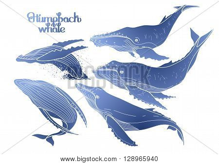 Collection of graphic humpback whales isolated on white background.  Giant sea and ocean creatures in blue colors