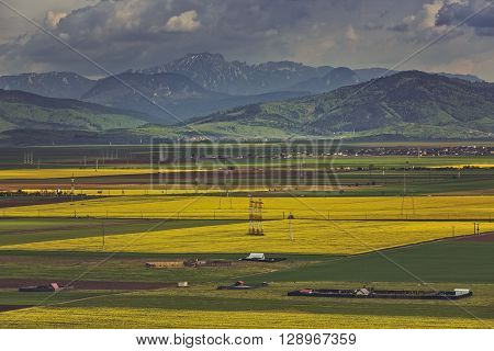 Picturesque landscape with vast yellow rapeseed fields near Ciucas mountains in Transylvania region Romania.