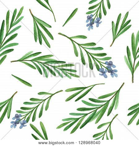 Watercolor seamless pattern hand drawn herb rosemary. Watercolor leaves and branches of rosemary on a white background. Herbs for packaging design, cards, postcards and book illustrations.