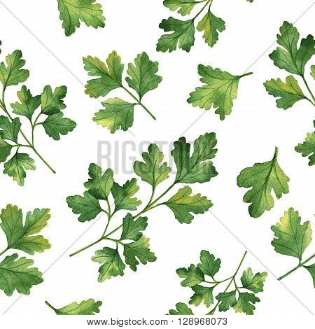 Watercolor seamless pattern hand drawn herb cilantro. Watercolor leaves and branches of cilantro on a white background. Herbs for packaging design, cards, postcards and book illustrations.