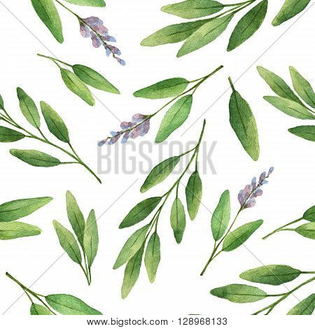 Watercolor seamless pattern hand drawn herb sage. Watercolor leaves and branches of sage on a white background. Herbs for packaging design, cards, postcards and book illustrations.